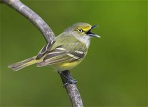 1000 images about backyard birds of east central florida