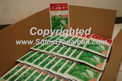 Bibit Jamur Tiram Semarang jual bibit benih selada krop lettuce great alisan harga