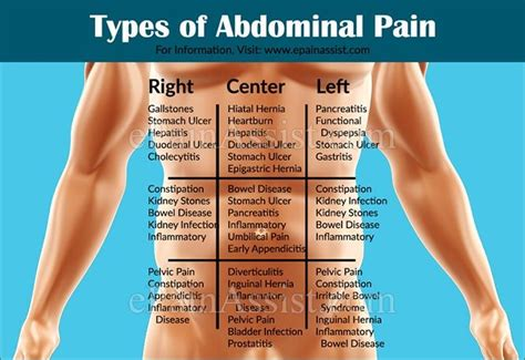 pain in left side of stomach after c section 135 best images about anatomy and physiology on pinterest