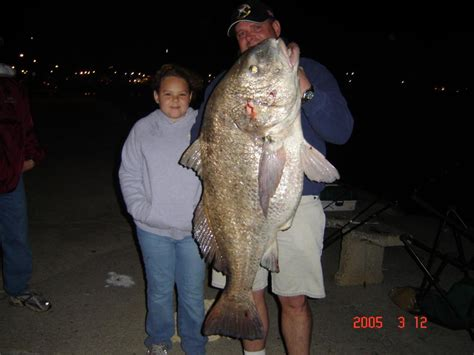 Records Ms Mississippi State Record Black Drum