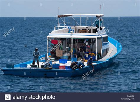 dhoni boat for sale maldivian tuna fishing boat with pantropical spotted