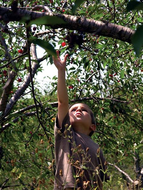 Cherry Picking In Door County by Exploring Door County Wisconsin House