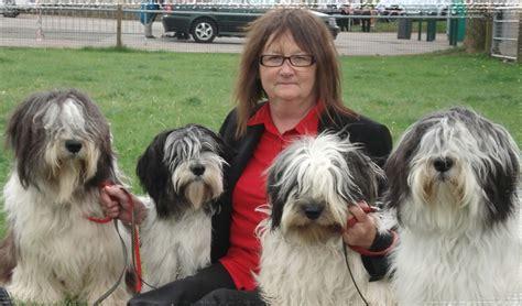 lowland sheepdog puppies lowland sheepdog breeders lowland sheepdogs