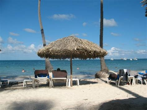 troline with bar tripadvisor dreams palm punta cana photos