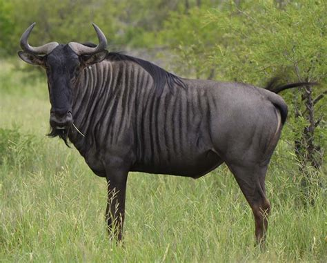 Animal Land 12 top 12 fastest land animals in the world