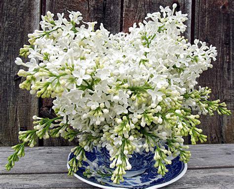 fresh cut flower preservative fresh cut flower preservative 6 pro tips for making fresh