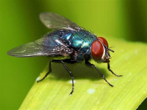 How To Get Rid Of Bugs In Backyard by All Tricks To Rid Your Yard Of Insects The