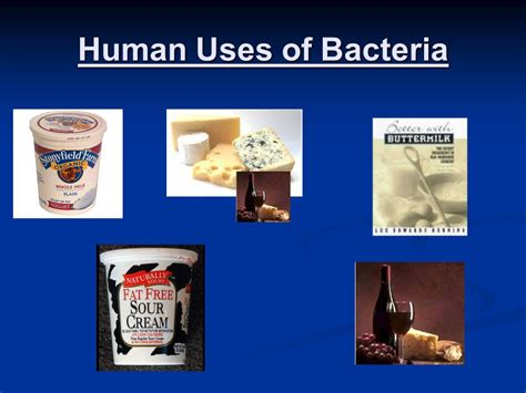 uses of bacteria ppt