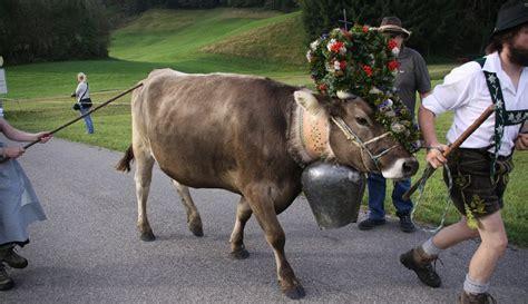 ufficio turistico castelrotto transumanza bestiame castelrotto paese alpe di