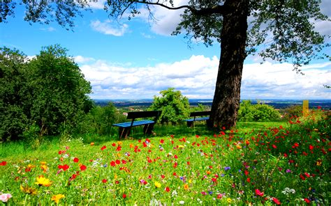 Landscape Pictures Of Flowers A Field Of Colorful Flowers Beautiful Nature Landscape