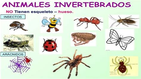 fotos animales invertebrados animales invertebrados