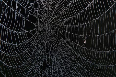 Spider Web photo 1115 20 spider web in fog in washington on the brazos state historic site washington