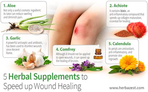 7 Remedies To Help A Wound Heal Quicker by 5 Herbal Supplements To Speed Up Wound Healing Herbazest
