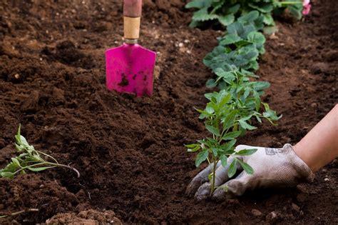 self sustaining garden the self sustaining suburban homestead buying checklist