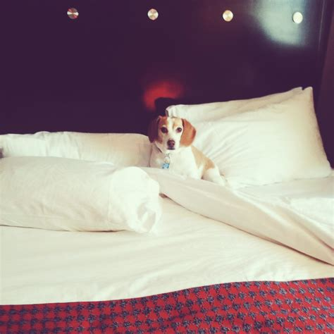 are dogs allowed in lowes 11 heavenly pet friendly hotels for you and your fur baby