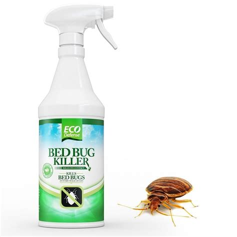 top 5 bed bug sprays blood insects killer which