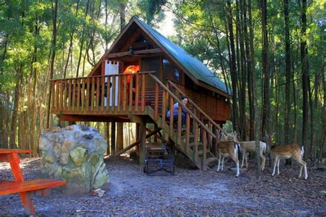 Home Plans With Guest House Tree House Cabin Picture Of Treehouse Forest Lodge