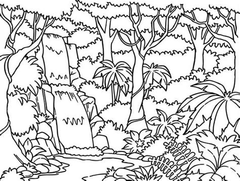 Free Coloring Pages Of Layers In The Rainforest Rainforest Plants Coloring Pages