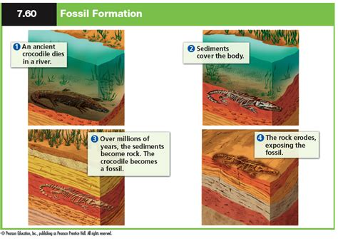 how fossils are formed diagram explain elaborate science practices through fossils