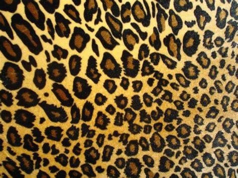 print a wallpaper animal print backgrounds free