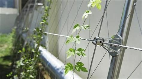 wire for climbing plants the world s catalog of ideas