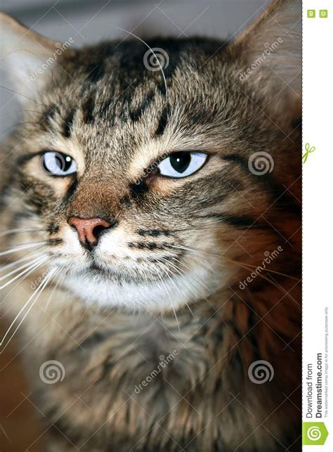 unusual cat stock photo image  pussycat mesmerising