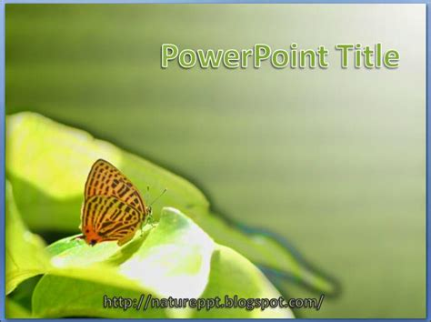 butterfly themes for powerpoint 2010 3 free nature powerpoint design template ppt background