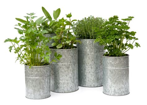 metal planters buy galvanised metal planters