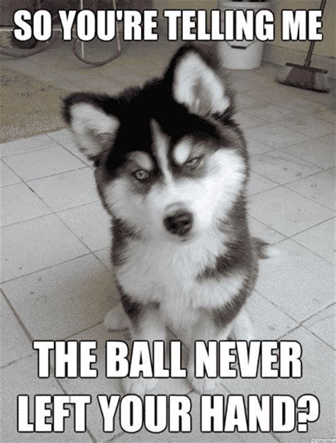 Confused Dog Meme - the best animal memes around 2018 this blog rules