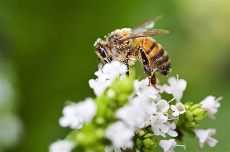 bees in backyard 4 facts about native bees in your backyard birds and blooms