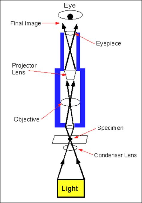 diagram of compound microscope 171 optics binoculars