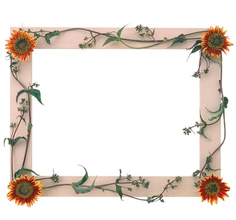 imagenes de marcos minimalistas marcos para fotos con flores fondos de pantalla y mucho