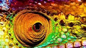 how chameleons change color how chameleons change color yahoo news