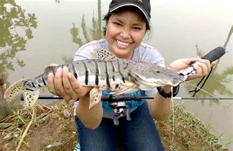 tiger fish ikan perdana   teknik casting