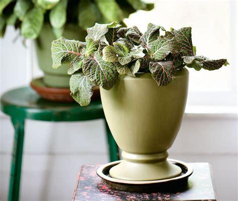 beautiful houseplants   knew