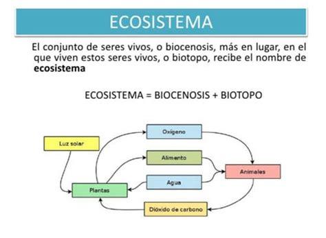 cadena trofica que pueda presentarse en la ciudad qu 233 es un ecosistema 101 ejemplos y tipos ovacen
