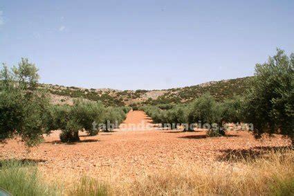 milanuncios pisos de alquiler zaragoza tabl 211 n de anuncios venta de olivares con fotos