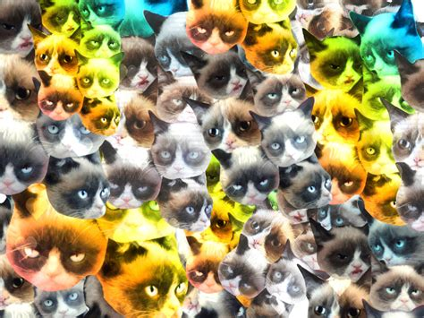 cat wallpaper collage cats collage wallpaper www pixshark com images