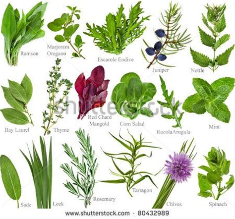 Vege Herbal herbs pictures and names names of herbs medicinal and culinary herbs pictures
