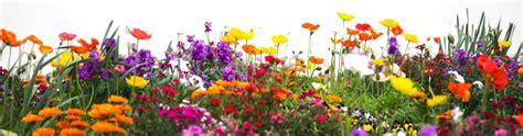 Image Of Garden Flowers Better Earth Gardens Tropicals Kelowna Landscape Garden Supply