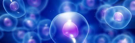cellule staminali donazione cellule staminali ail