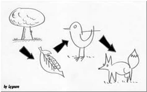 cadenas y tramas alimenticias y niveles troficos octavo c niveles tr 243 ficos cadenas y tramas alimentarias