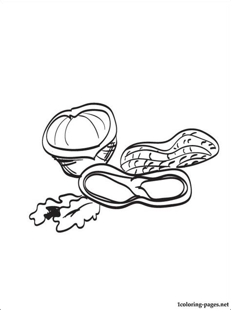 Free Coloring Pages Of The Nut Picture Nuts Coloring Pages