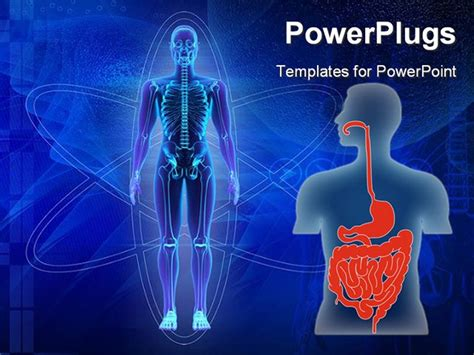 Human Torso As Scheme Of Human Alimentary System Human Digestive System Ppt