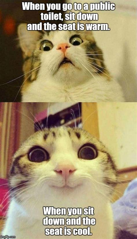 Warm Toilet Seat Meme - toilet cat imgflip