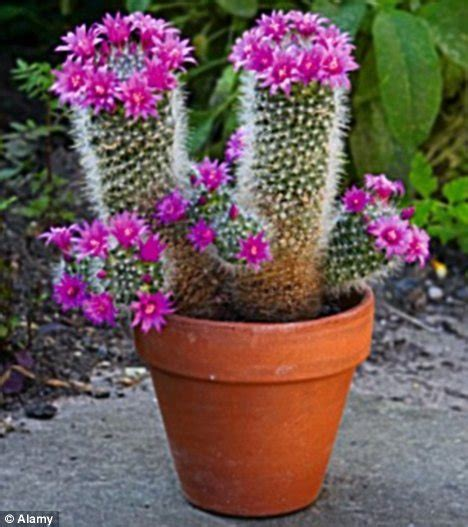 Window Gardening by Monty Don Cactus Makes Perfect Just Keep Your Desert