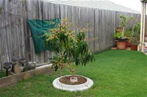 Pupuk Tanaman Bunga Yang Bagus media tanam yang paling bagus untuk buah mangga tanaman