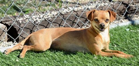 adopt a puppy los angeles los angeles adoption of the week meet squizzy rufus and