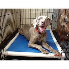 No Chew Bed by 1000 Images About Chew Proof Bed Indestructible