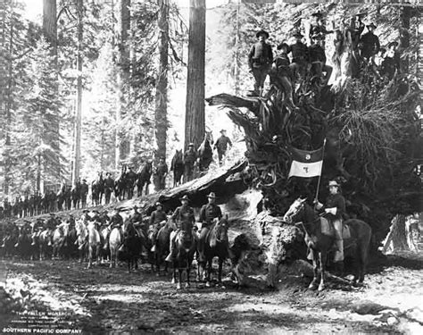 war  white house  redwoods conservation save